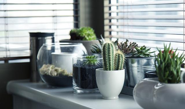 Rastliny na parapete.jpg